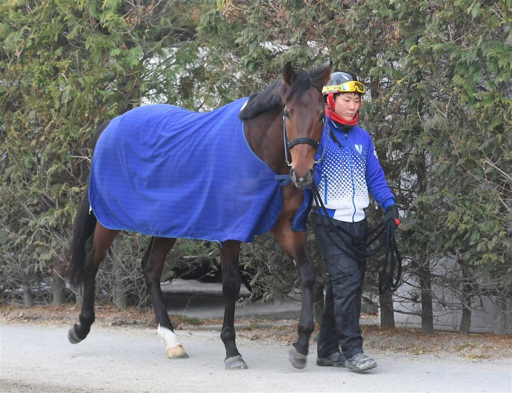 「zbat競馬」の競馬プログラム